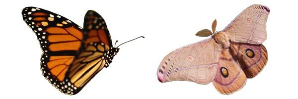 تفاوت های بید و پروانه