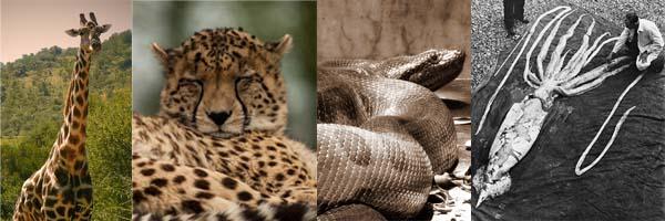 حيوانات رکورد دار