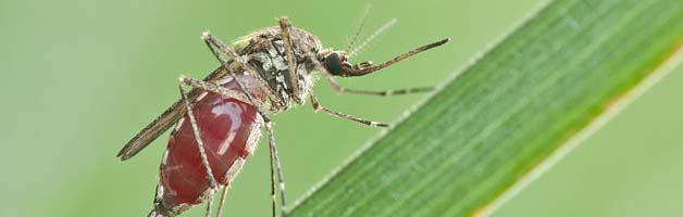پشه ها سوار بر قطرات باران می شوند و زنده می مانند