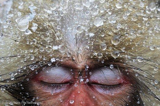 ۱۳ عکس خیره کننده حیات وحش سال ۲۰۱۲