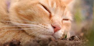 خروپف گربه ها چگونه است؟
