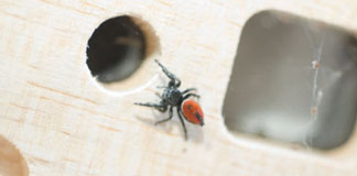نفرتیتی اولین عنکبوت پرنده فضانورد
