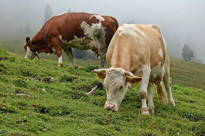 حیوانات گیاه خوار