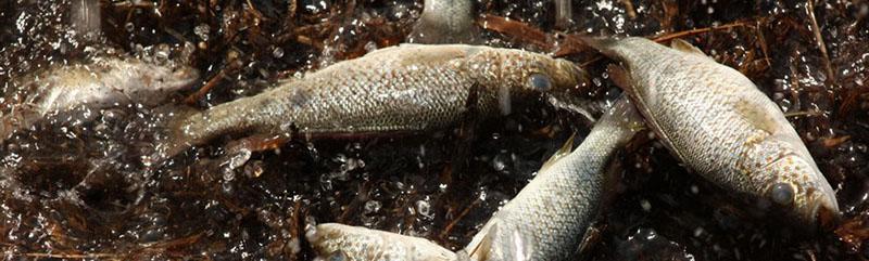 Lluvia de Peces پدیده ای که در آن ماهی ها از آسمان می بارند